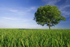 Free Tree Stock Image - 14667441