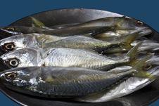 Free Mackerels In Stainless Dish Stock Photos - 14667973