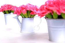 Pink Stock Image