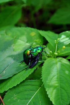 Free Insect Royalty Free Stock Photos - 14668938