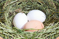 Free Eggs In Nest Stock Image - 14676791