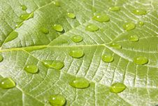 Waterdrops On Leaf Royalty Free Stock Photos