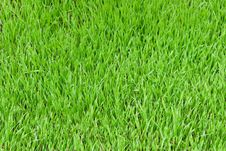 Free Green Grass Stock Photography - 14670242