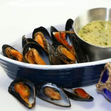 Free Mussels Stock Photography - 14670262