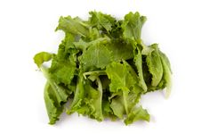 Free Green Salad Stock Image - 14670431
