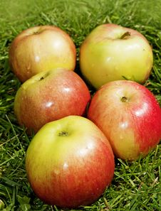 Free Apples Royalty Free Stock Photography - 14670487