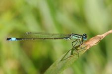 Free Dragonfly Royalty Free Stock Images - 14671529