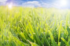 Free Grass And Sky Stock Image - 14671891