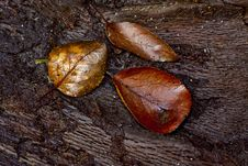 Leaf On A Log Royalty Free Stock Photography