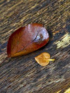 Leaf On A Log Stock Photos