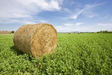 Free Trefoil Bale In Field Royalty Free Stock Photo - 14672145