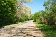 Free Road In The Forest Stock Photography - 14673692