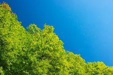 Free Trees Stock Photos - 14673863