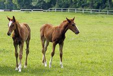 Free Horses Stock Photo - 14674770