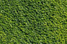 Free Green Wall Royalty Free Stock Image - 14674956