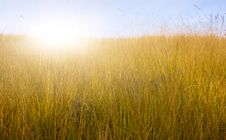 Free Green Meadow Royalty Free Stock Photography - 14674977