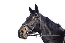 Beautiful Black Horse, Isolated Royalty Free Stock Images