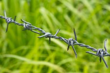 Free Barbed Wire Stock Photography - 14675312