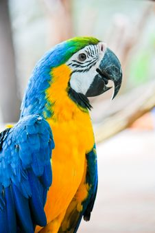 Free Macaw Stock Images - 14675354
