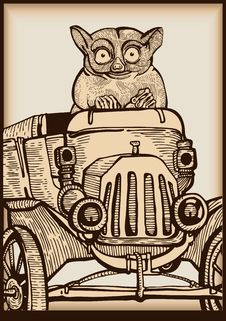 Free Animal Driving An Old Car Stock Photos - 14676093