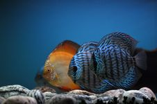 Free Fish Fish And Again Fish Royalty Free Stock Image - 14676416
