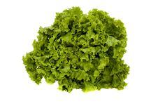 Free Lettuce Royalty Free Stock Photo - 14676525