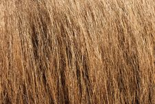 Free Dry Grass Texture Royalty Free Stock Images - 14677279