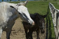 Free Farm Royalty Free Stock Photos - 14678018