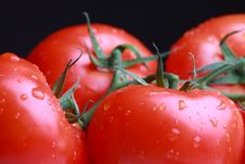 Free Fresh Tomatoes Royalty Free Stock Images - 14678399