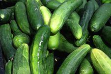 Free Cucumbers On Display Stock Photo - 14679680