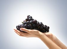Free Image Of Tasty Grapes In Human Hands Stock Photography - 14679902