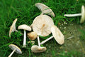 Free Mushrooms In The Grass Royalty Free Stock Photos - 14682508