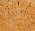 Free Tree Rings Stock Photography - 14684742