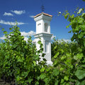 Free Vineyard Stock Photography - 14685842