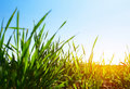Free Grass Royalty Free Stock Photography - 14688217