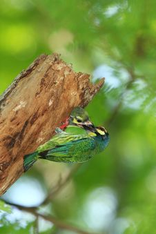Free Bird Royalty Free Stock Photos - 14681138