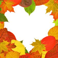 Free Heart Shape Bright Autumn Leaves Frame Stock Photography - 14681282
