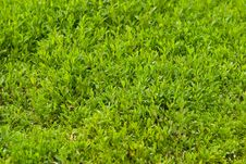 Free Green Grass Stock Photography - 14683002