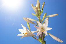 Free Flower Stock Image - 14683411
