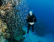 Free Scuba Diver Looking At Glass Fish Stock Photo - 14683720