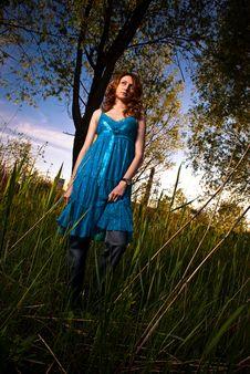 Free Sunset Reeds View Stock Image - 14683951