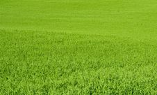 Free Meadow Stock Images - 14685174