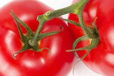 Free Two Tomatoes Stock Photography - 14685282