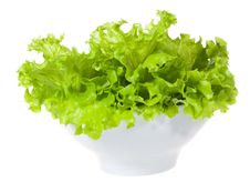 Lettuce Salad Stock Photography