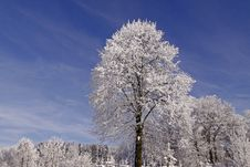 Trees With Hoarfrost In Hilter, Germany Stock Photos