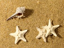 Sea Still Life Over Sand. Royalty Free Stock Image