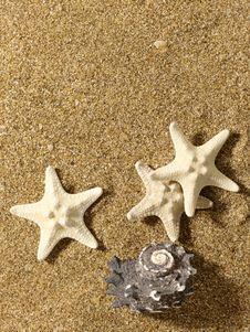Free Sea Still Life Over Sand. Stock Image - 14689511