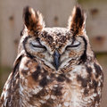 Free Long Eared Owl In Closeup Royalty Free Stock Images - 14691369