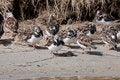 Free Turnstone Bird Standing Near Water Stock Images - 14692814