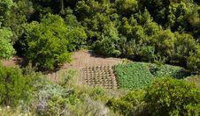 Free Kitchen Garden. Stock Photo - 14690000
